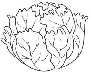 Lettuce Coloring Vegetable Coloring Pages Fruit Coloring Pages Coloring Pages