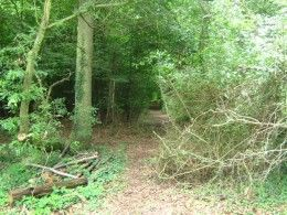 If You Go Down To The Woods Today Britain S Haunted Forests