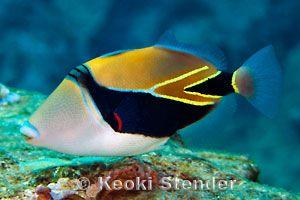 Great Beginner Fish For A Saltwater Aquarium Marine Fish Marine Fish Tanks Animals