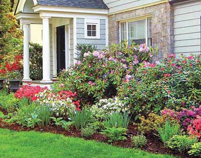 Best Foundation Plants For Stellar Curb Appeal Ants