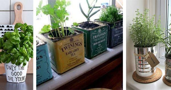 Diff rents supports pour faire pousser des plantes - Plantes aromatiques cuisine ...