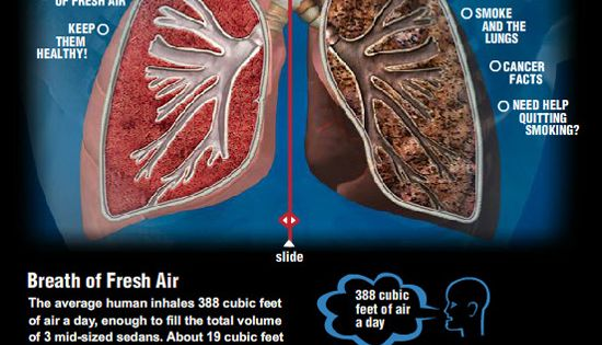 Healthy Lungs Vs  Smoker U2019s Lungs  For An Interactive Version Go To        Amerihealth Com