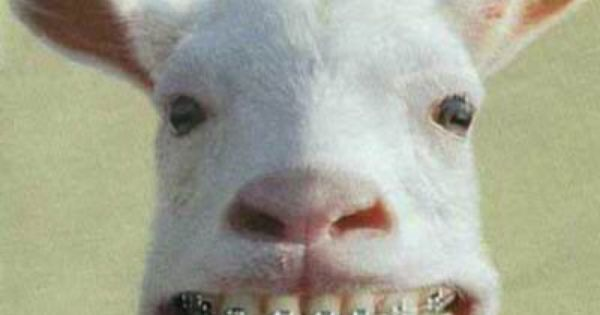 Braces for all! | Animals with Braces | Pinterest ...