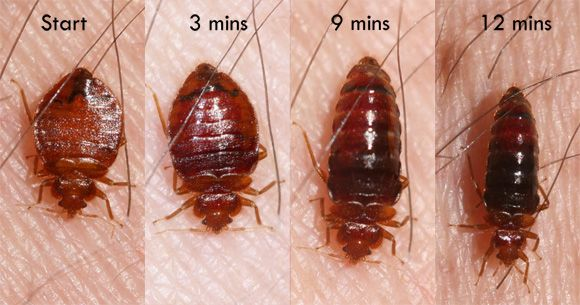 Bed Bugs With Images Signs Of Bed Bugs Bed Bug Bites Kill