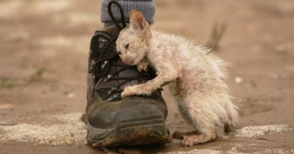 This picture breaks my heart! Kitten From October 2011 Floods in Thailand…