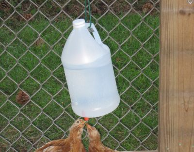 how to make chicken waterer with nipples