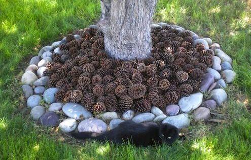 Comment emp cher les chats et les chiens d uriner sur vos arbres jardins animales et pin - Comment empecher un chat d uriner a un endroit ...