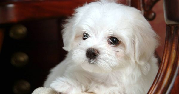 Cute White Dogs Google Search Baby Dogs Dog Baby Pictures