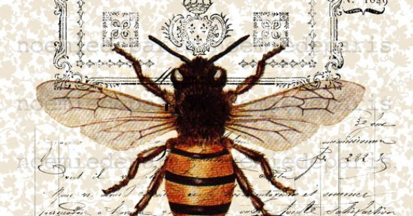 Queen Bee Antique French Vintage Paper By Noemiedeparis On