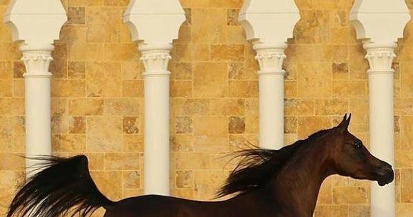 الخيل العربي On Instagram الخيل خيل خيول الخيول الخيول العربية الخيل العربية الخيول العربيه الخيل العربي الخيول العربية الأصيلة مربط Horses Animals Giraffe