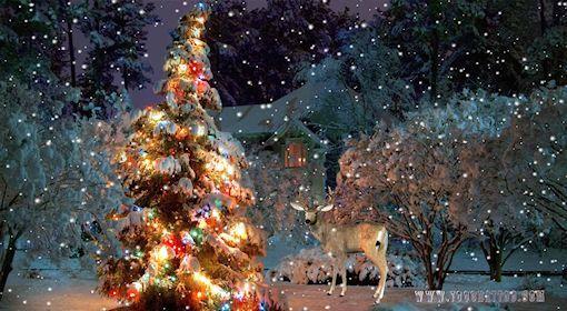 Fond d ecran neige sur le sapin de Noël | Sapin de noel animé, Paysage  hiver noël, Noel