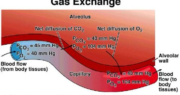 Gas Exchange Alveolar Gas Exchange Respiratory Therapy Nursing School Studying Emergency Medicine