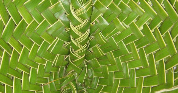 How To Weave A Coconut Leaf Basket : Niue basket woven from a fresh coconut leaves called