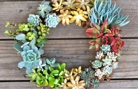 DIY Live Succulent Wreath ***SUMMER WREATH?***
