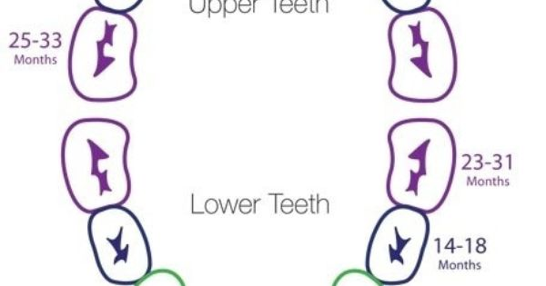 Baby Teeth Schedule Reference Pinterest Teeth, Babies and - baby teeth chart