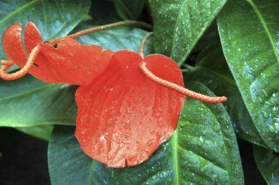 Pin On Gardening Indoors