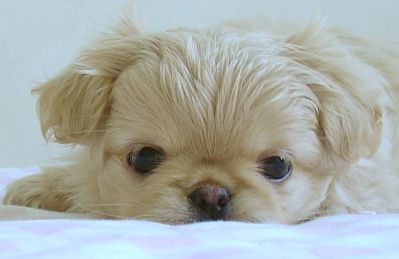 How To Get Rid Of Fleas On Young Puppies Bathe Them In A Warm