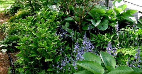 Shade Garden for side yard