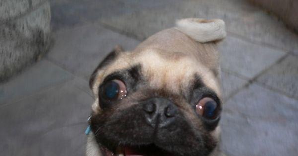 Pin On Pug Eyes