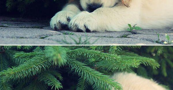 I want him under my tree!! :)