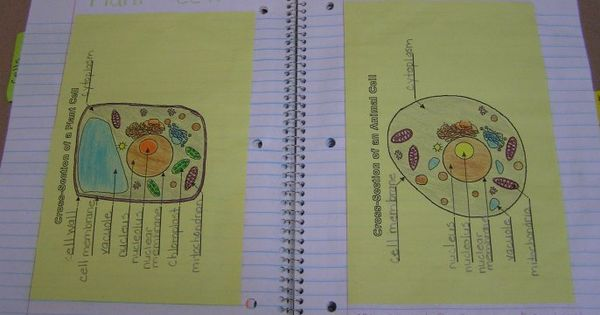 Pasting graphic organizers into notebooks with SPIs = great idea (Also a