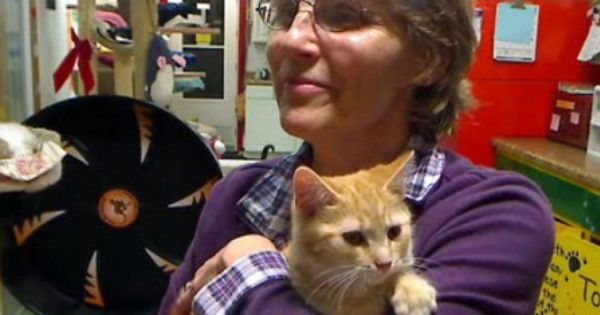Friends Of Felines Rescue Center Jacci Moss Is Owner Pf This Cage Free Center For Cats Feline Pets Animals