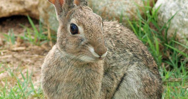 Wild Rabbit By Photographyflower On Deviantart Cute Animals Wild Bunny Animals Wild