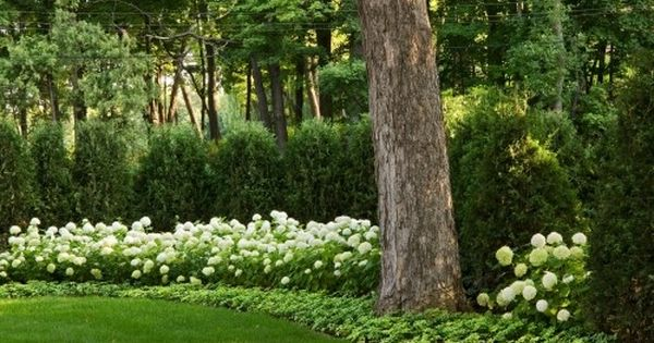 Pachysandra Border With White Hydrangea And Boxwood