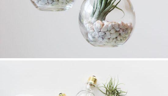 DIY Lightbulb Terrariums | Click Pic for 30 DIY Home Decor Ideas