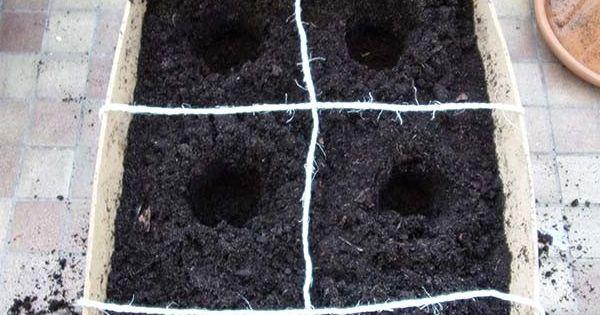 Carr de fraise planter en cagette dans un potager sur balcon mon petit jardin int rieur - Que planter dans un carre potager ...
