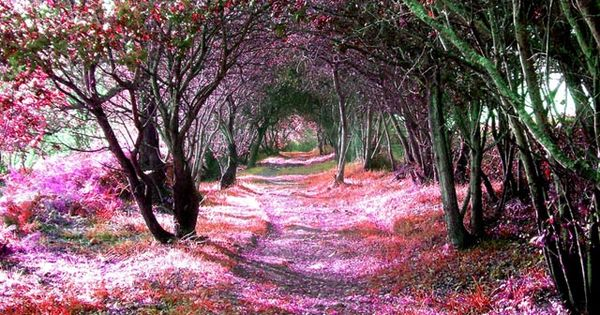 WALK WITH ME Tree Tunnel, Sena de Luna, Spain