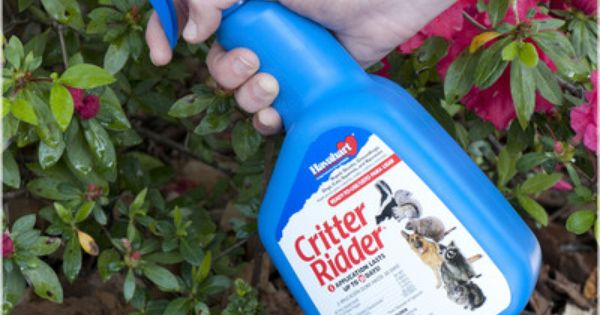 Read About Squirrel Repellant At