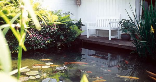 Estanque con plantas acu ticas y peces - Decoracion de estanques ...