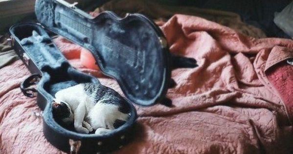 Pin Na Doske Cute Pets