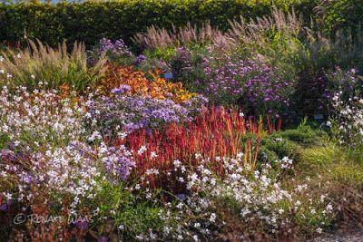 Gartenreise Zum Berggarten Hannover Der Berggarten Ist Teil Der Herrenhauser Garten In Hannover Im Bild Die Roten Japani Gartenarchitekt Garten Bepflanzung