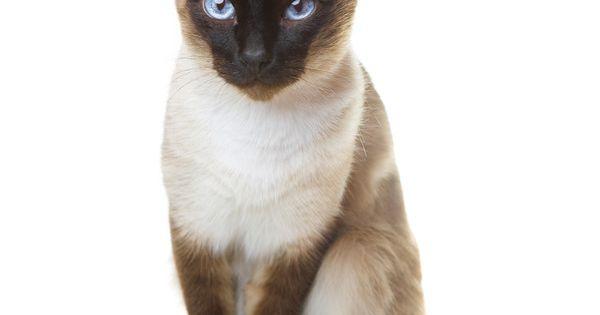 Cats 974 Tys Izobrazhenij Najdeno V Yandeks Kartinkah Liked On Polyvore Featuring Animals Cats Pets Fillers And Gatos Gatos Fofura Felinos