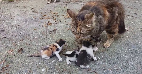 Baby Kittens Meowing Very Loudly For Mom Cat X Post R Catvoice Https Www Youtube Com Watch V 3pdolb2hm1g Kitten Meowing Cat Mom Baby Kittens