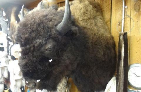 Stuffed Buffalo Head Wall Mount