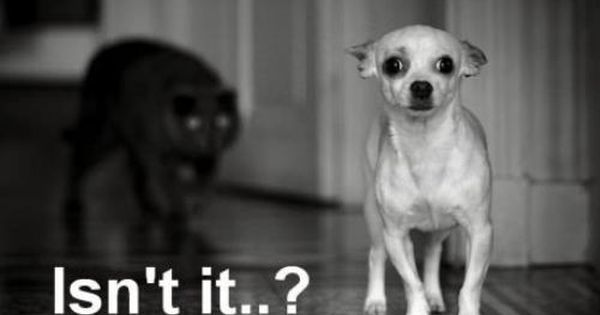 silly dog saying | Funny dog photo with caption dog stalked by