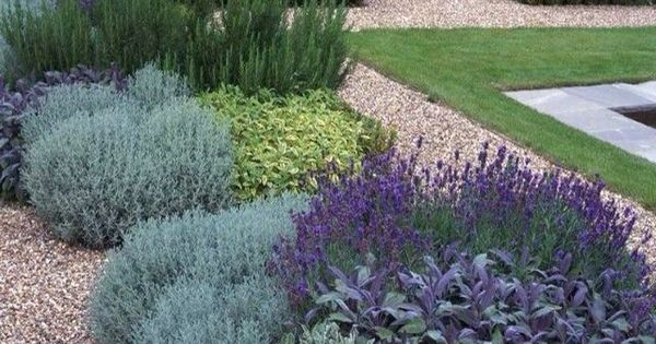 Lavender Rosemary And Thyme Garden Pinterest Lavender