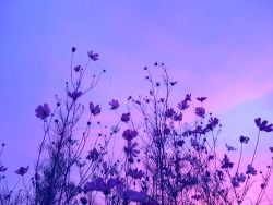 Photography Art Cute Fashion Kawaii White Hipster Vintage Inspiration Boho Indie Grunge Dark Blue Pink Purple N Lavender Aesthetic Pale Grunge Violet Aesthetic