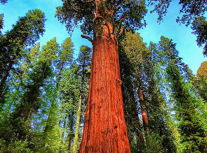 sequoia national park divorced singles personals She's single and ready to mingle melanie griffith  sexually charged scenes at 17 a marriage to and divorce from don  but in our national collective .