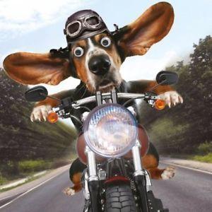 Funny Basset Hound Dog Birthday Card Easy Rider Goggly Moving Eyes