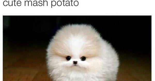 Mashed potatoes | Cute and Funny Animals | Pinterest ...