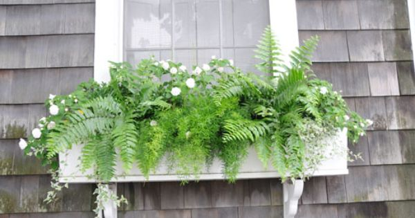 Window Box Gardening | fern windowbox