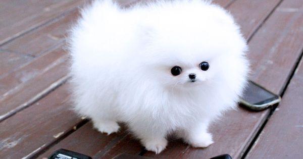 Big Fluffy Dog Drawing