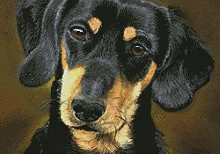 Dachshund Portrait Cross Stitch Pattern Portrait Cross Stitch Dachshund Weiner Dog