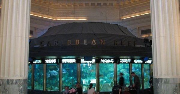 Aquarium, Chicago and Chicago illinois on Pinterest