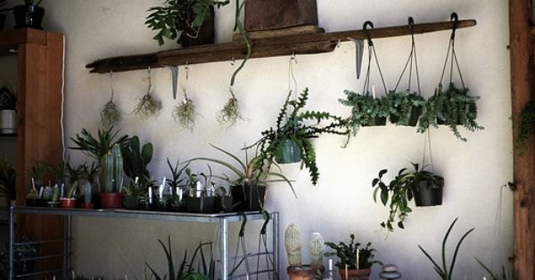 plant wall (Photo by Brian Ferry) // hanging plants too high for