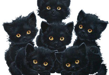 ڿڰ Looky What I Finded In My Trick Or Treat Bag Momma Can I Keep Em Jd With Images Black Cat Art Cats Illustration Cat Illustration
